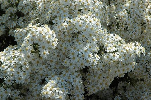 Royal Botanic Gardens, Cranbourne - Eckersley Garden