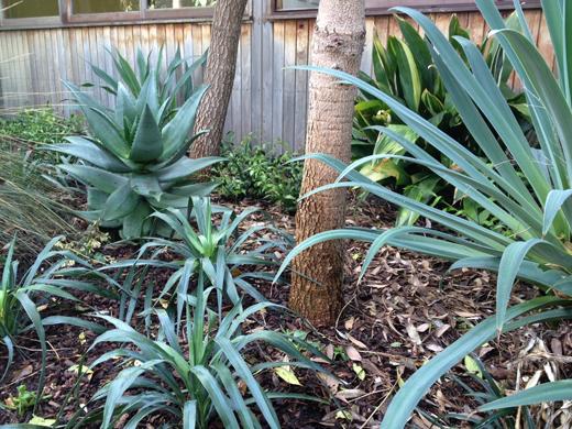 2 Yucca